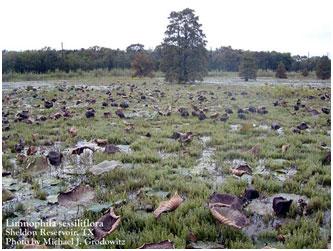 Sheldon reservoir san jacinto river basin texas water for Sheldon lake fishing